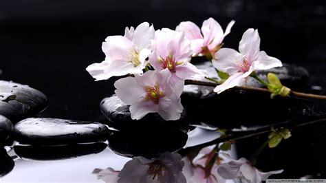 flower zen wallpaper download zen stones background 2 wallpaper 1920x1080