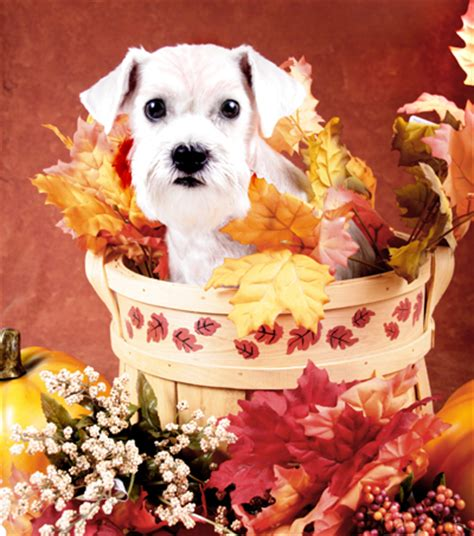 thanksgiving puppy thanksgiving safety tips