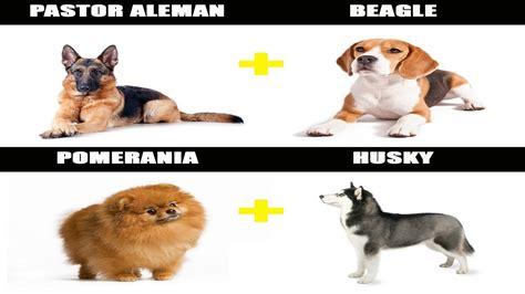 perros e hijos de 6071135443 7 perros mestizos impresionantes perros tiernos y graciosos youtube