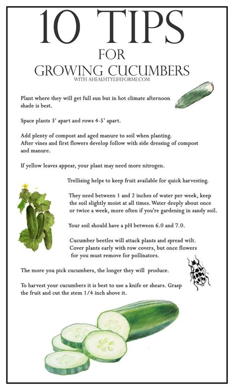 10 Tips On Growing Great Plants This Summer by 10 Tips For Growing Cucumbers A Healthy For Me