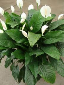 Tropical Foliage House Plants - tropical plants pictures and names 10 potted plant tropical foliage plants inc pretty