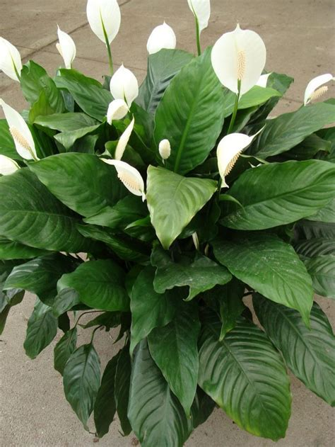 foliage plants names tropical plants pictures and names 10 potted plant