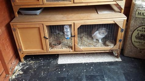 Handmade Rabbit Hutches For Sale - rabbit hutch for sale the best 28 images of ebay guinea