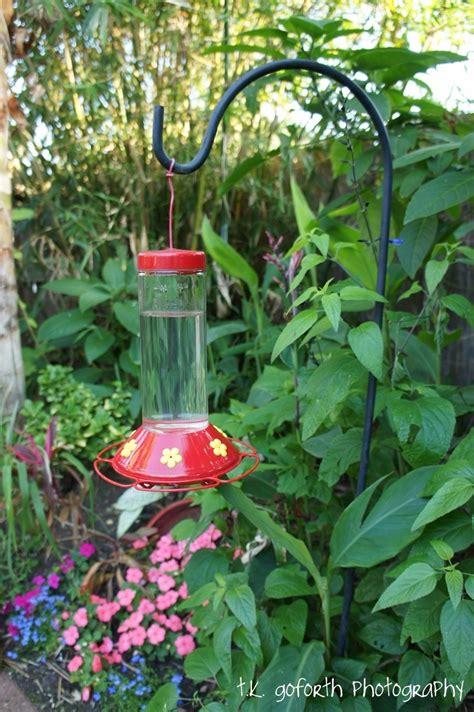 hummingbird migration houston