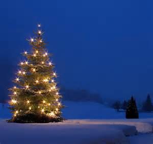 weihnachtsbaum schnee www imgkid com the image kid has it