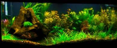 Damian's Discus Aquarium