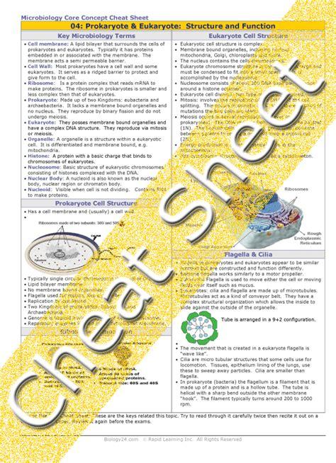Prokaryotic And Eukaryotic Cells Worksheet by Prokaryotic And Eukaryotic Cells Worksheet Middle School