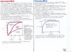 biochemical structure hemoglobin vs myoglobin www