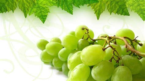 wallpaper buah anggur wwwbuahazcom