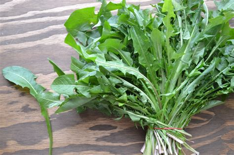 dandelion greens from field to plate motive nutrition