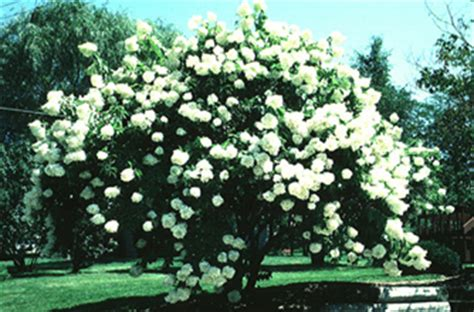 summer flowering trees shrubs and vines wisconsin