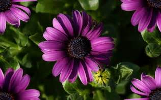 flores lindas colouring pages