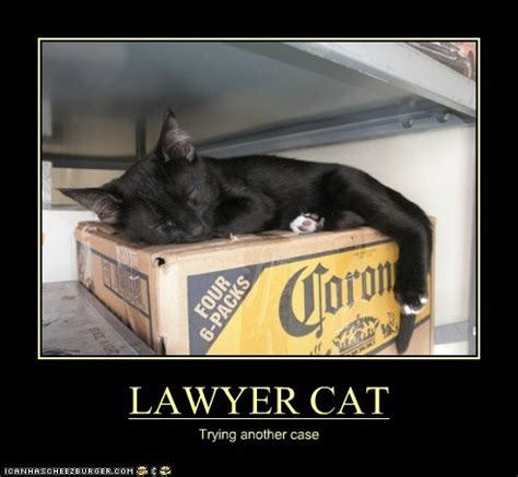 Lawyer Cat Meme - friday funnies last weekend in may 2015 already