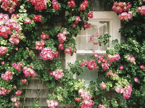 country cottage wallpaper flower wallpaper country cottage nantucket massachusetts