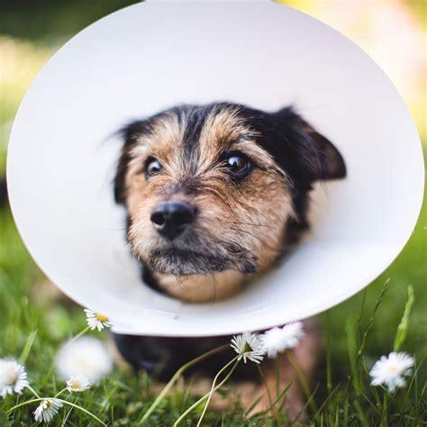 pet insurance pet insurance 101