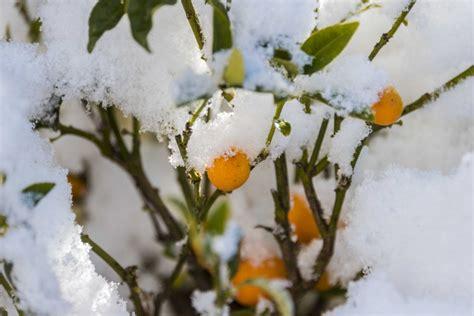 sui fiori e l incanto della neve quot napoletana quot sui fiori e sulle piante