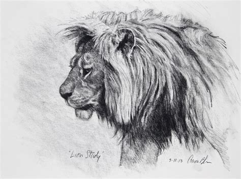 Drawings Of Animals by Charcoal Drawings Animals Pencil Drawing