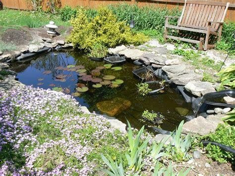 backyard pond plants diy water gardens designing a backyard water garden