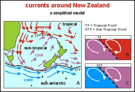 move to new zealand for a year ecology and biogeography of the poor knights