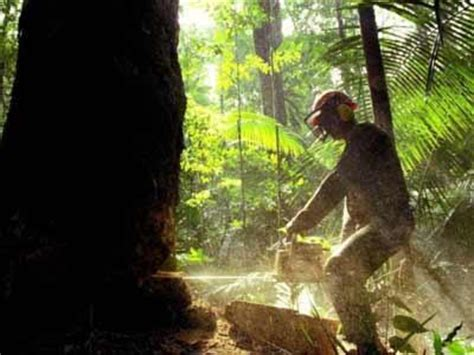imagenes ecologicas impactantes herramientas web 2 0 concepto tala de arboles