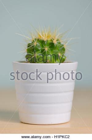 small potted cactus plants stock photo image 68600366 small cactus in pot stock photo royalty free image