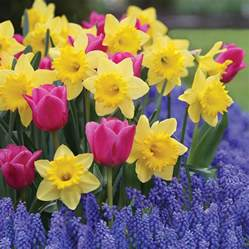 add eye candy to spring garden with bulbs lake tahoe