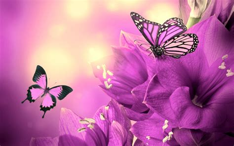 wallpaper flower and butterfly purple flowers butterflies wallpaper