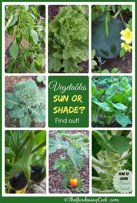 What Garden Vegetables Like Shade Shade Tolerant Vegetables Vs Sun Friendly Veggies The