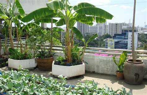 Kitchen Garden Kerala by Start A Refreshing Rooftop Kitchen Garden