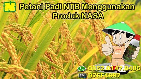 petani padi ntb  menngunakan produk nasa ketahanan