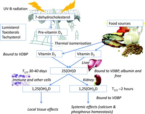 Uv B L For Vitamin D by The Consequences For Human Health Of Stratospheric Ozone
