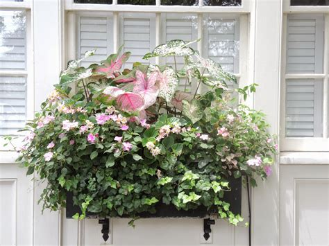 shade window boxes jll design taking a stroll window boxes
