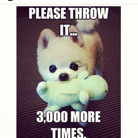 Adorable Animal Memes - please throw it 3000 more times cute animals adorable meme