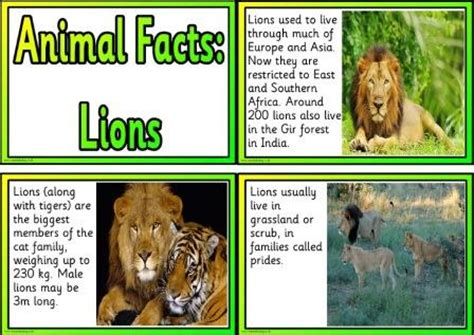 Printable Animal Fact Cards | free animal facts printable flashcards or posters