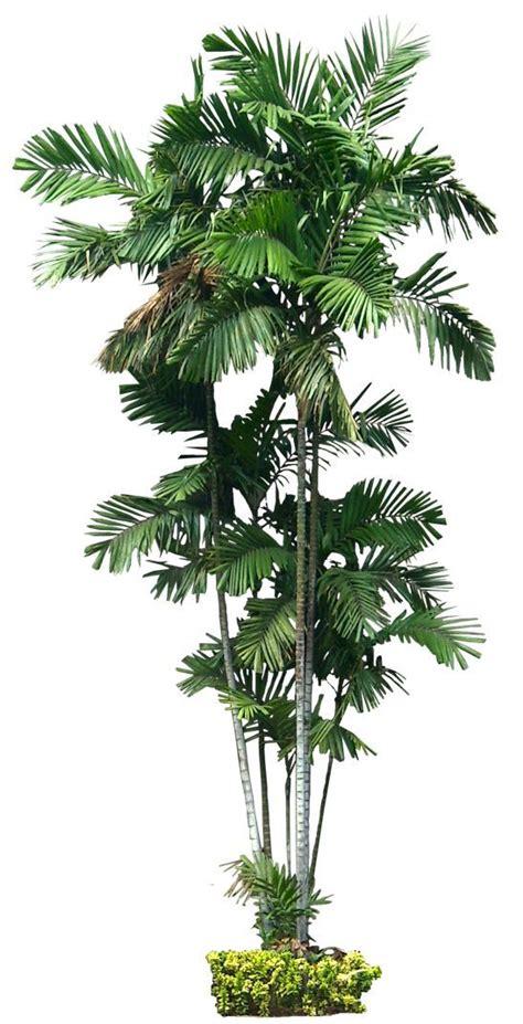 bilder palmen 4254 pin hi auf skills pflanzen baum