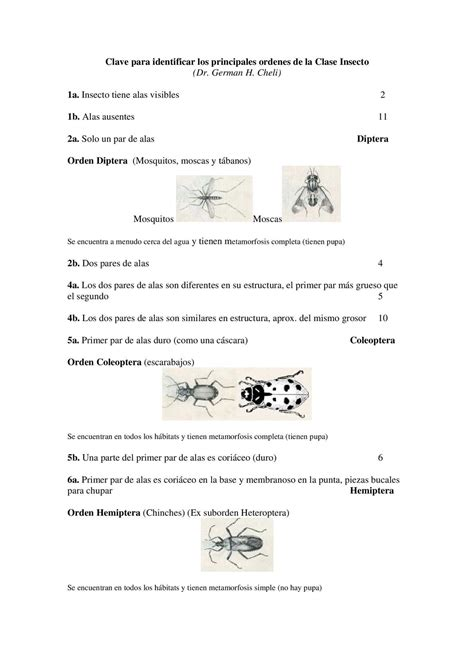 claves para convertirte en 1493621963 calam 233 o claves dicot 210 micas para identificar insectos
