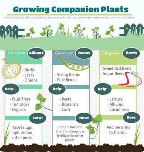 Companion Gardening by Companion Plants Garden Farm