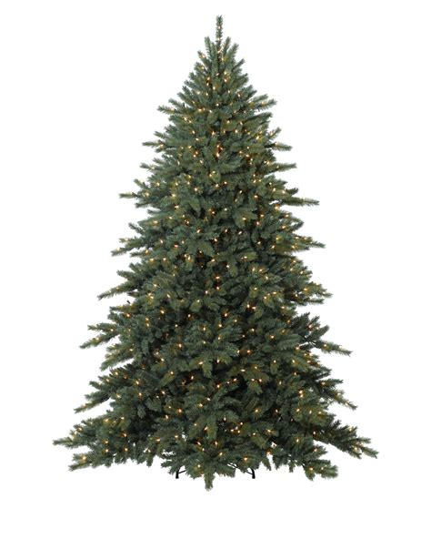 connie fir christmas trees for sale treetopia