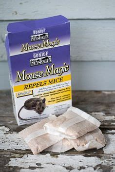 1000 ideas about mice repellent on getting