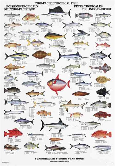 types of aquarium fish la tene maps indo pacific tropical fish
