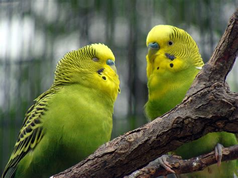 how to your bird how to improve your bird cage i parakeets