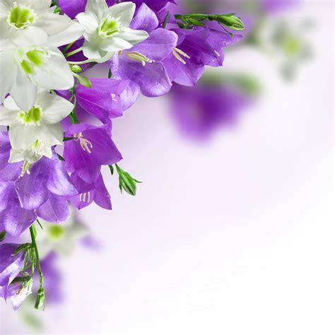 20 flower backgrounds psd vector eps jpg download