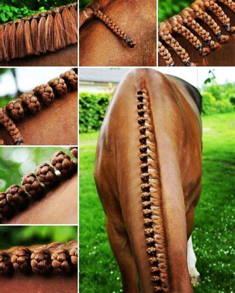 braid names 64 best images about horse plaiting and braiding on