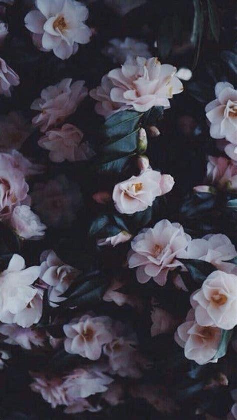 pin  kayla johnson  photographytravel flower