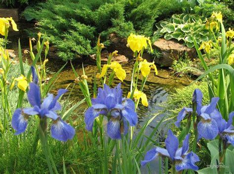 olive garden 40241 90 best landscape design ландшафтный дизайн images on landscaping backyard ideas