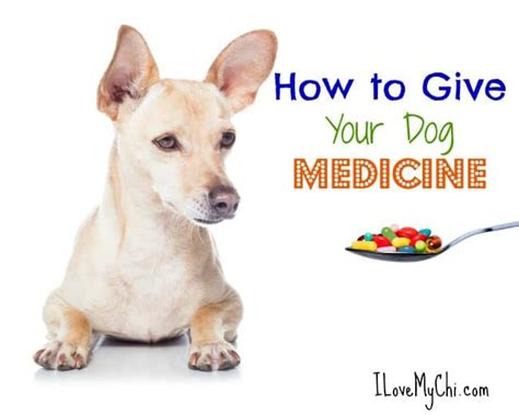 how to give puppy how to give medicine to dogs