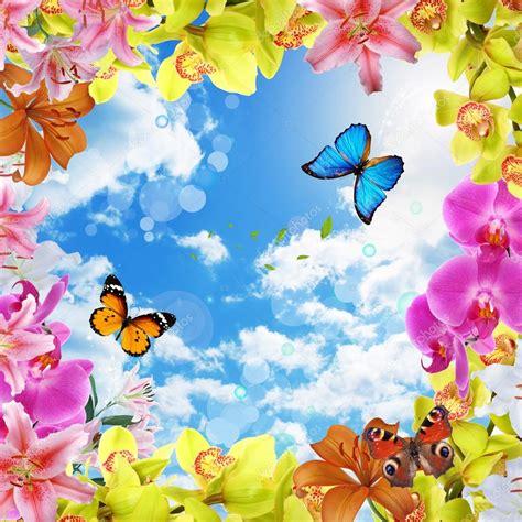 fiori e farfalle fiori e cielo e farfalle foto stock 169 qwerty2013 22845460