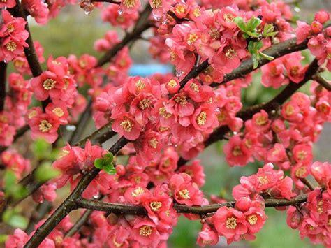 new year flower tree flowering