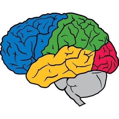 google images brain pictures of human brain www pixshark com images