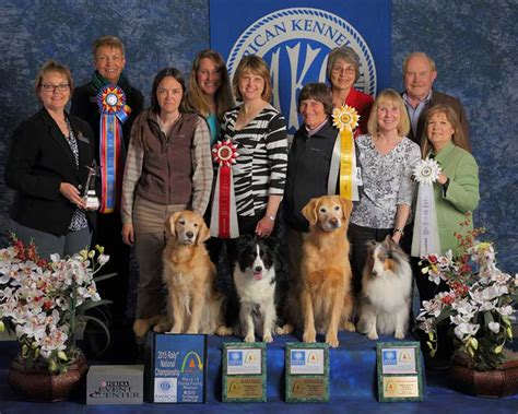 yorkie breeders in brevard county akc golden retriever nationals photo